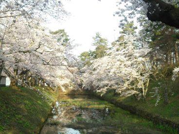 公園が徒歩6分 桜祭りが楽しめます!